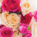 花束・記念品などの親への贈呈ギフトについて